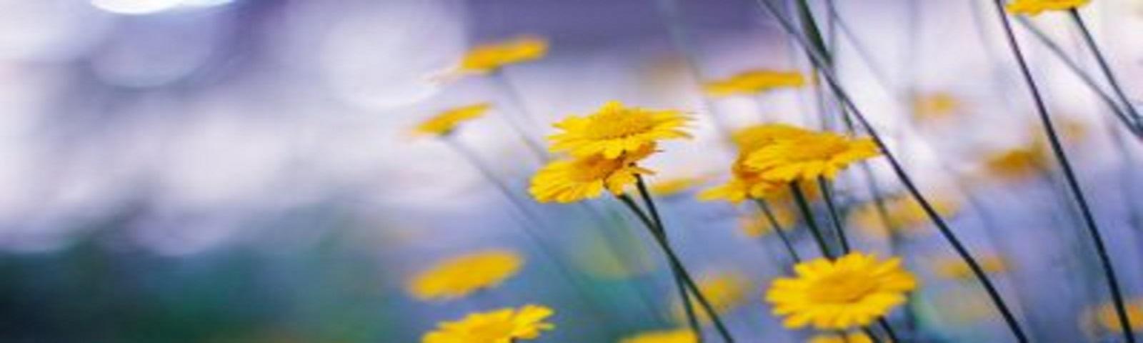 2019 「該離開還是留下? 外遇的自我療癒和關係修復:EFIT 與EFCT的應用」工作坊開放報名中